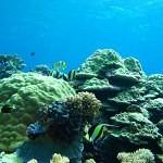 Korálové útesy jako rybí toaleta