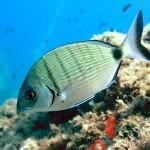 Chytré ryby se rybářům vyhnou