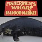 Do obchodu s rybami zavítal tuleň