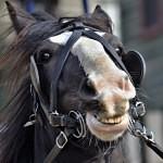 I koně musí k zubaři