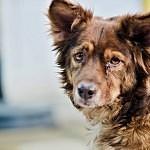 Když psa sužuje epilepsie