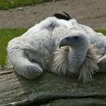 Kamery v ZOO Ústí ukážou tuleně i supy