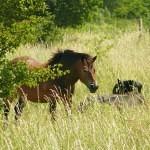 Za divokými koňmi do Milovic