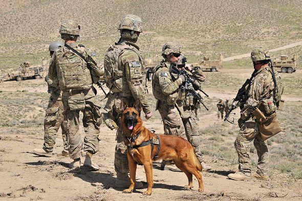 pes pracovní vojenský