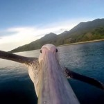 VIDEO: Zvířata pohledem GoPro kamery