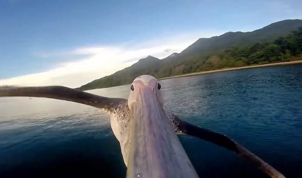 GoPro pelikán