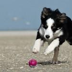 Kdo je chytřejší? Pes, nebo batole?