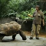 Za velkými želvami do českých zoo
