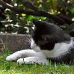 Myš, která se nebojí koček