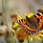Votické motýlárium přivítalo první obyvatele