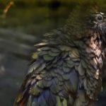VIDEO: Zlínský nestor kea se koupe