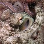 Chobotnice používají zbraně