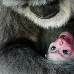 Vzácná mláďata v pražské zoo