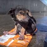 VIDEO: Poraněné štěně zachránili z řeky