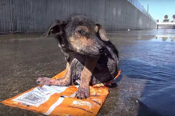 zraněné štěně pes Hope For Paws