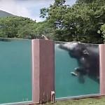 Slon - Zoo postavila slonům bazén