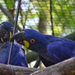 FOTO: Pestrý ptačí svět v ZOO Lešná
