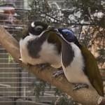 Výstava exotů přibližuje i handicapované papoušky