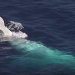VIDEO: Vzácná bílá velryba spatřena!