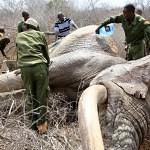 Zranění sloni si přišli pro pomoc za lidmi