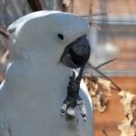 Papouščí zoo v Bošovicích – 2. díl