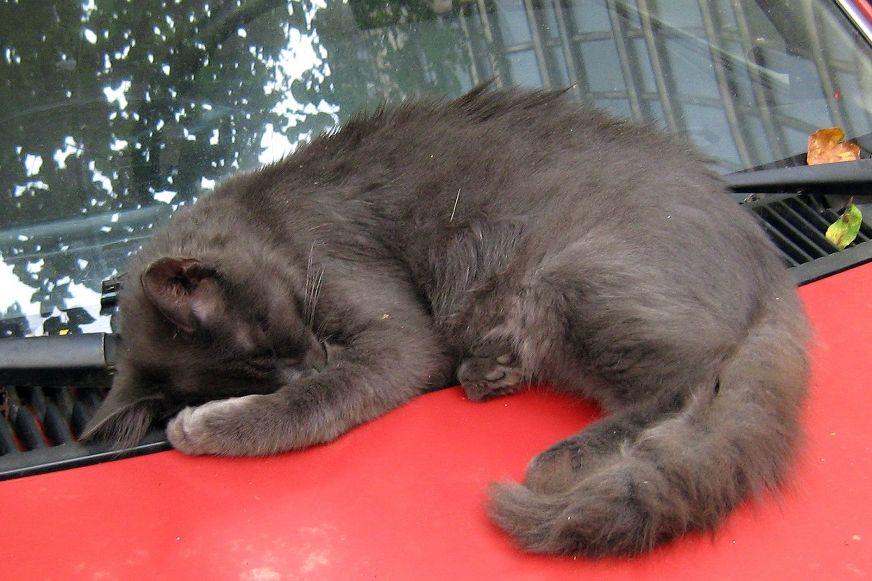 kočka spí na autě