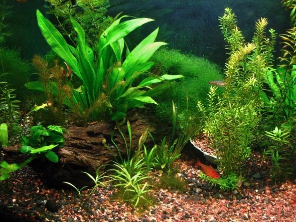 Ekosystém v akváriu