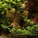 Několik tipů pro krásné akvárium – 1. část
