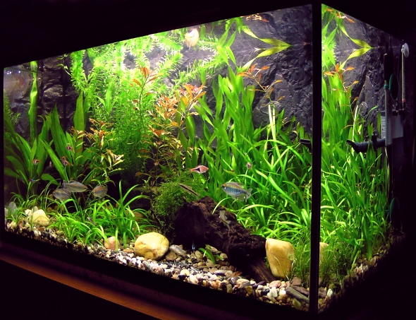 Fungující akvárium