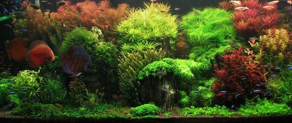 Akvárium záplava zeleně