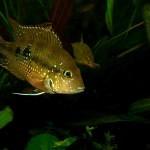 Několik tipů pro krásné akvárium – 3. část