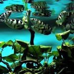 Několik tipů pro krásné akvárium – 2. část