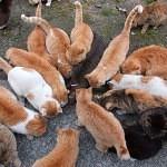 VIDEO: Kočičí ostrov, králičí ostrov