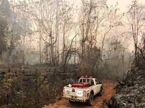 prales požár