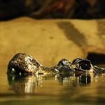 krokodýli Zoo Jihlava