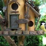 Krmítka pro ptáky – kousek divočiny přímo za oknem