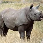 Za nosorožci do českých zoo