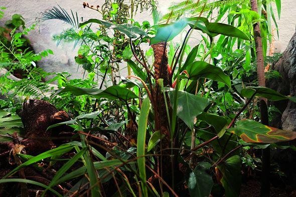 Tropické rostliny v novém pavilonu Zoo Jihlava 1