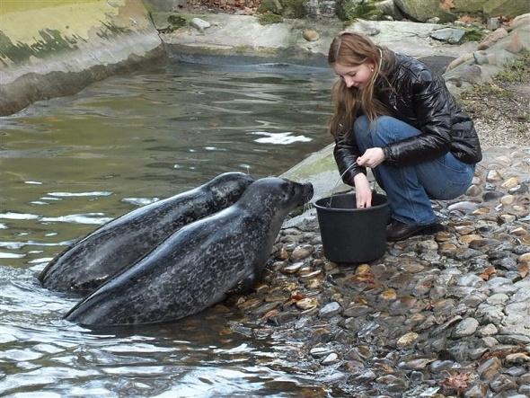 tuleň Junior v ZOO Ústí