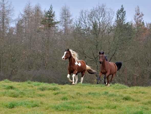 koně - Krkavčí Hora