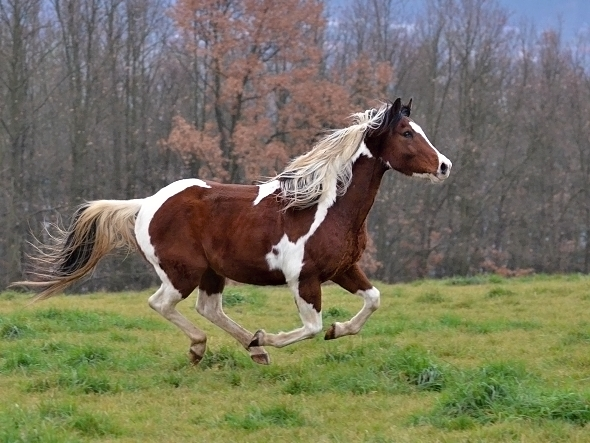 kůň Krkavčí Hora