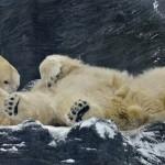 FOTO: Sněhová nadílka v Zoo Praha