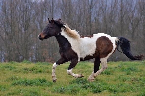 kůň - Krkavčí Hora
