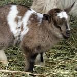 Zoo Tábor přivítala první letošní mláďata