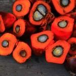 Nechceme palmový olej v potravinách ani v palivu