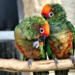 Papouščí zoo Bošovice zahájí sezónu!