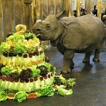 Maruška oslavila druhé narozeniny