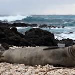 VIDEO: Kýchající tuleň
