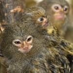 Plzeňská Amazonie hýří mláďaty