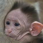 Primátí přírůstky v ústecké zoo